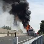 busbrand6
